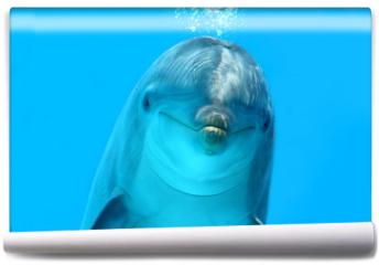 Fototapeta - Dolphin Look