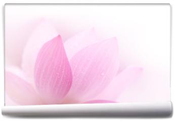 Fototapeta - Closeup on lotus petal
