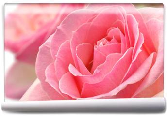 Fototapeta - Kwiat róży