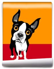 Fototapeta - funny illustration of Boston Terrier