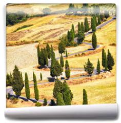 Fototapeta - Cypress tree scenic road in Monticchiello, Tuscany, Italy.