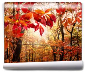 Fototapeta - Herbst: Mystischer Wald
