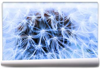 Fototapeta - The Dandelion background.