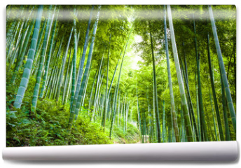 Fototapeta - Bamboo forest and walkway