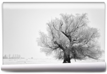 Fototapeta - Beautiful tree in winter time in February 2014, Romania