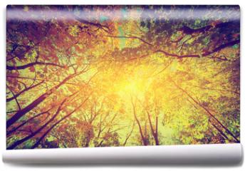 Fototapeta - Autumn, fall trees. Sun shining through colorful leaves. Vintage