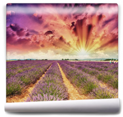 Fototapeta - Lavender meadows in summer, Provence - France
