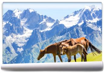 Fototapeta - Horse in mountains