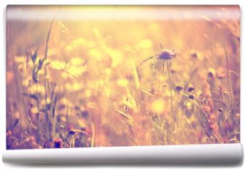 Fototapeta - Blurry vintage meadow background