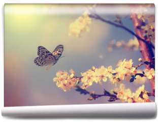 Fototapeta - Butterfly and cherry blossom