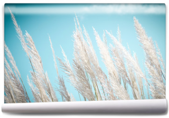 Fototapeta - softness white Feather Grass with retro sky blue