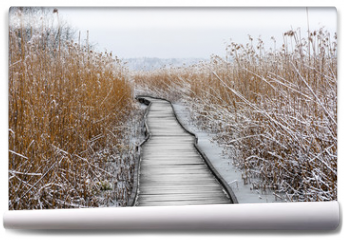 Fototapeta - Boardwalk with frozen reeds