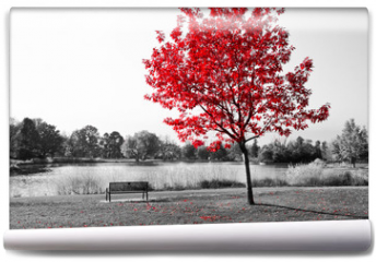 Fototapeta - Red Tree Over Park Bench