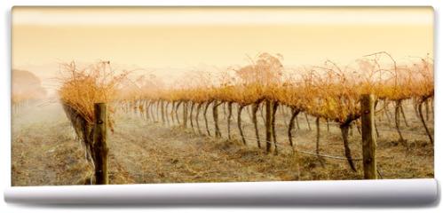 Fototapeta - Vineyard Rain