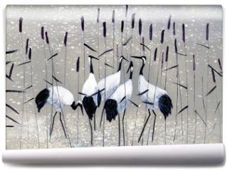 Fototapeta - family of cranes
