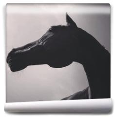 Fototapeta - pferd von unten