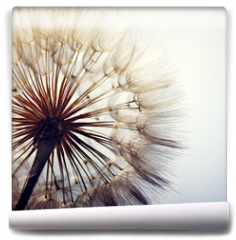 Fototapeta - big dandelion on a blue background