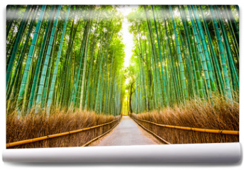 Fototapeta - Bamboo Forest of Kyoto, Japan