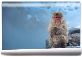 Fototapeta - now monkey Macaque Onsen