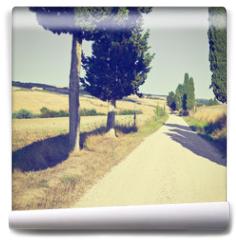 Fototapeta - Cypress Alley