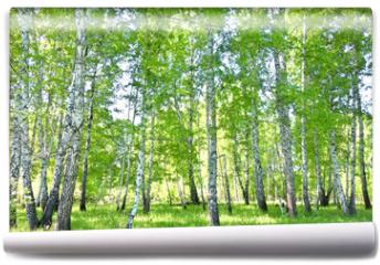 Fototapeta - birch forest