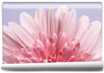 Fototapeta - Gerbera flower blossom.