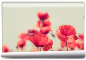 Fototapeta - Poppy flowers retro peaceful summer background