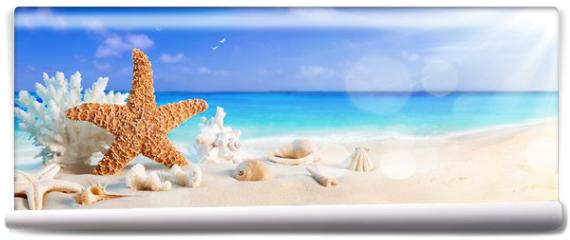 Fototapeta - seashells on seashore in tropical beach - summer holiday background