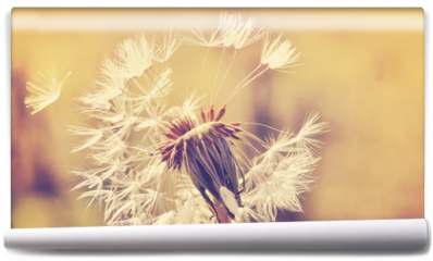Fototapeta - Autumn dandelion close up