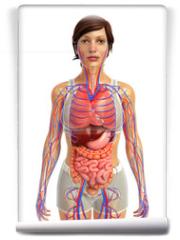 Fototapeta - 3d rendered illustration of