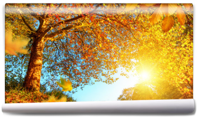Fototapeta - Golden autumn scenery with lots of sunshine