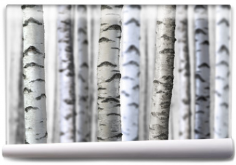 Fototapeta - seamless birch trees