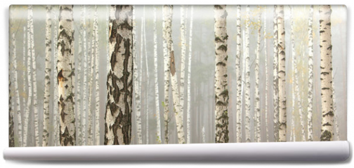 Fototapeta - Grove of birch trees and dry grass in early autumn, fall panorama