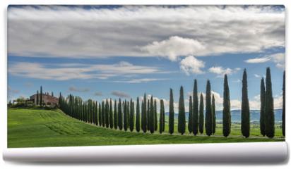 Fototapeta - Avenue of cypresses