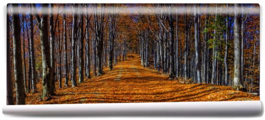 Fototapeta - Colorful autumn trees