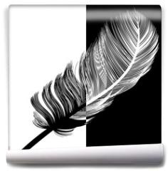 Fototapeta - Plume en noir et en blanc