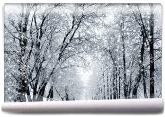 Fototapeta - Winter scenery, snowstorm in park