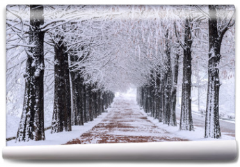 Fototapeta - Row of trees in Winter with falling snow.