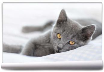 Fototapeta - Kot