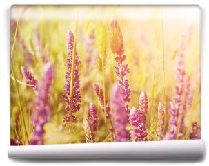Fototapeta - Fioletowe kwiaty na łące
