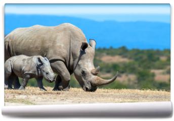 Fototapeta - African white rhino