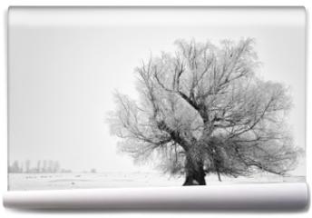 Fototapeta - Beautiful tree in winter time in February 2014, Romania
