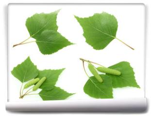 Fototapeta - Birch leaves isolated. set