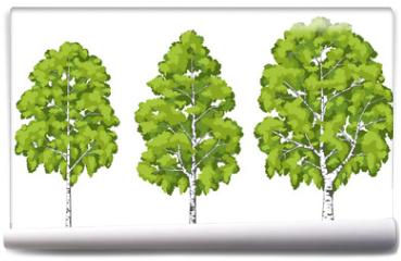Fototapeta - Birch tree. A set of images.
