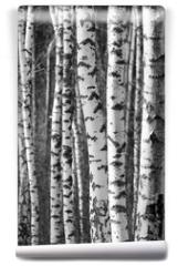 Fototapeta - Birch tree trunks - black and white natural background