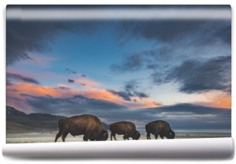 Fototapeta - Bison in Sunset
