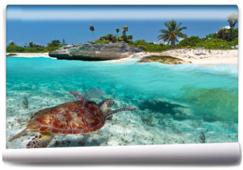 Fototapeta - Caribbean Sea scenery with green turtle in Mexico