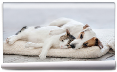 Fototapeta - Cat and dog sleeping