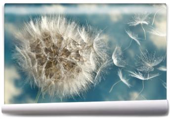 Fototapeta - Dandelion Loosing Seeds in the Wind