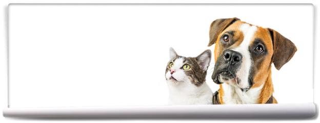 Fototapeta - Dog and Cat Together on White Horizontal Banner
